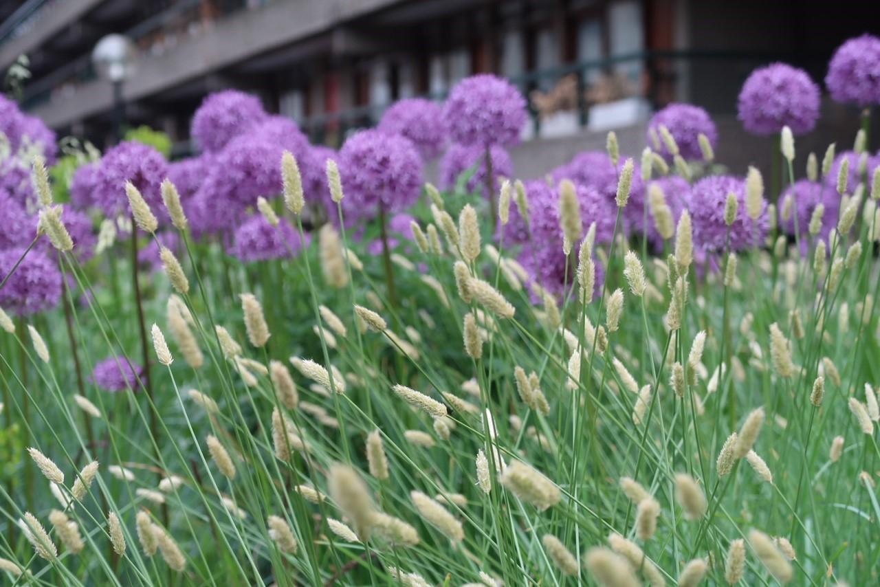 Barbican Center toukokuu Alliumit ja heinät 2018