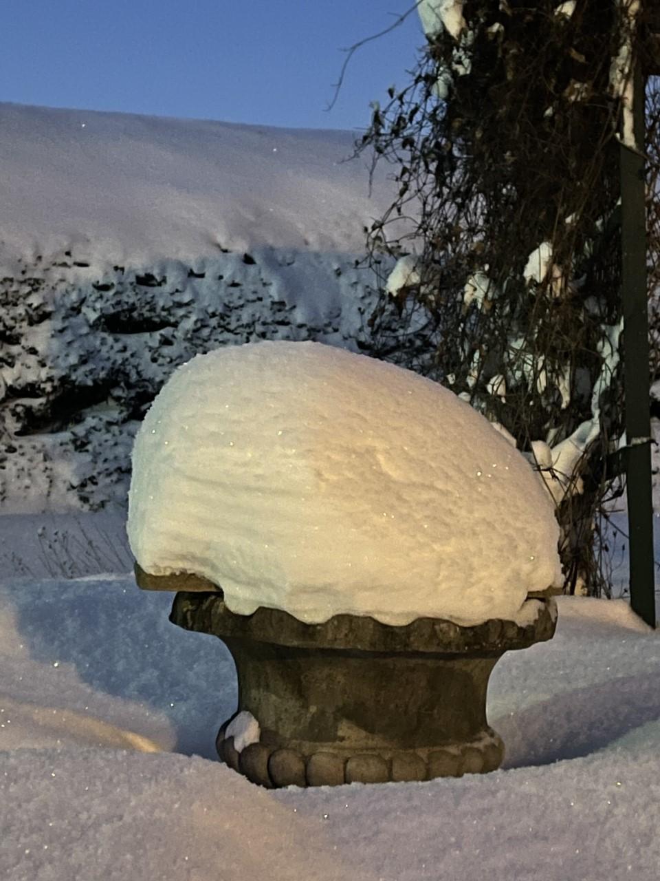 Talvi21 _ Kukkaruukku
