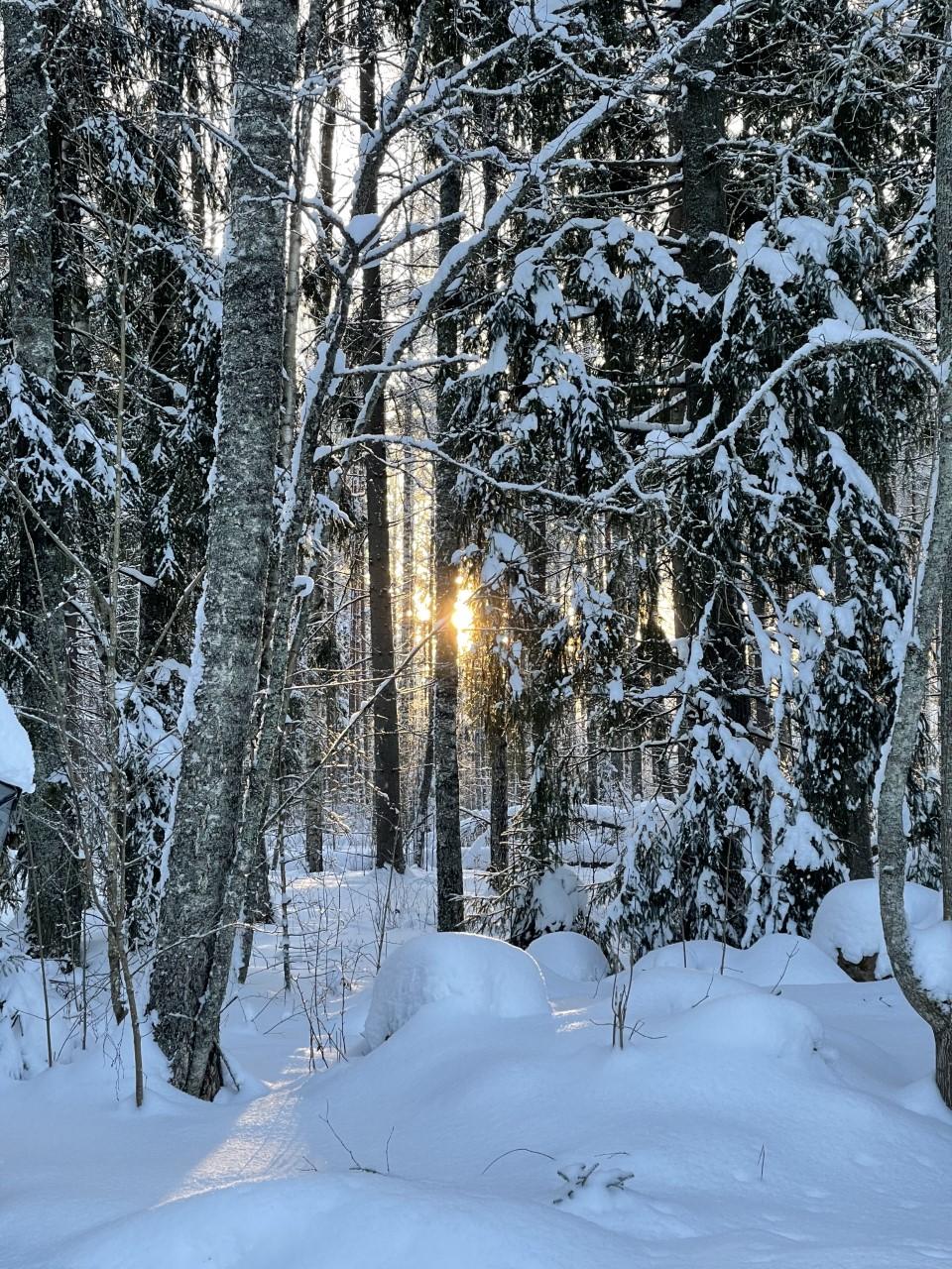 talvi21 aurinko