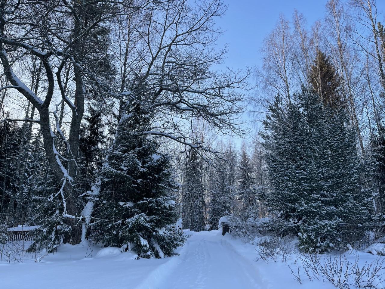 talvi21 portille